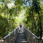 &lt;!--:pt--&gt;Daintree Rainforest&lt;!--:--&gt;&lt;!--:en--&gt;Daintree Rainforest&lt;!--:--&gt;