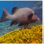 <!--:pt-->Lista dos lugares de mergulho<!--:--><!--:en-->Diving & Snorkeling post list<!--:-->