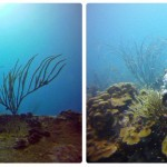 Diving in Los Roques