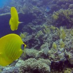 Dives in Hurghada: Hamda and Turft El Shahed