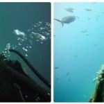 Info dos mergulhos em Los Roques